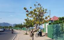 Cưỡng chế thu hồi dự án lấn vịnh Nha Trang, lấy đất xây công viên