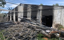 Chủ trại chôn lén 138 con heo trong rừng cao su khai heo bị chết cháy