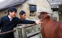 Hà Tĩnh: Nông dân lao đao với dịch tả heo và viêm da nổi cục trên trâu, bò