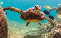Giới khoa học bối rối khi phát hiện rùa biển bơi theo vòng tròn
