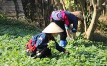 ILO: Tỉ lệ phụ nữ Việt tham gia lao động hơn 70%, toàn cầu dưới 50%