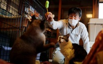 10 năm thảm họa Fukushima: Người ở lại vùng nhiễm phóng xạ giải cứu mèo