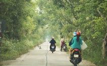 2 dự án khôi phục rừng tràm U Minh Thượng: Đụng đâu thấy sai nấy