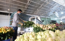 Hoa hồng Đà Lạt tăng giá gấp 3 lần dịp 8-3