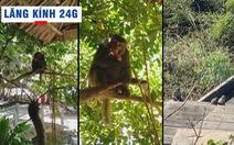 Lăng kính 24g: Dân đảo Cù Lao Chàm náo loạn vì khỉ