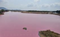 Đầm nước ở Bà Rịa - Vũng Tàu bỗng biến thành màu hồng tím