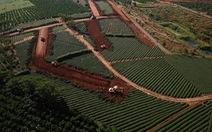 Thanh tra hoạt động phân lô bán nền ở Lâm Đồng, Khánh Hòa, Bình Thuận