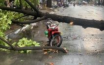 TP.HCM: Mưa to gió lớn, cây ngã đè xe máy làm 2 người bị thương