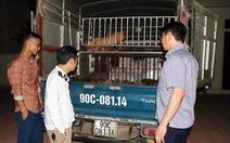 Bắt xe chở 50 con heo giống nhiễm bệnh từ Hà Tĩnh ra Hà Nam