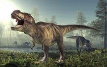 Hàng tỉ con khủng long bạo chúa từng thống trị Trái đất