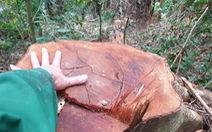 Quảng Trị yêu cầu xử lý nghiêm vụ phá rừng phòng hộ đầu nguồn sông Bến Hải