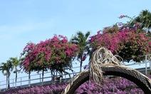 Quản lý hồ Xuyên Mộc đề nghị bứng hàng cây 'check-in', huyện kiến nghị giữ lại