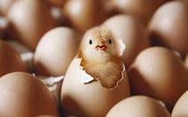 Hiệu trưởng Trung Quốc nói có siêu năng lực, biến trứng gà chín nở thành gà con