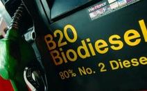 Indonesia là nhà sản xuất dầu diesel sinh học lớn nhất thế giới