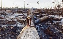 Càng phá rừng, càng phát sinh nhiều dịch bệnh như COVID-19