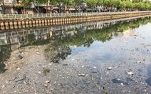 Vớt hàng chục ghe cá chết trên kênh Nhiêu Lộc - Thị Nghè