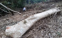 Phê bình giám đốc, cảnh cáo nhiều cán bộ để phá rừng đặc dụng Vườn quốc gia Xuân Sơn