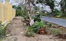 Sau vụ cây phượng đè chết nữ điều dưỡng, cho rà soát toàn bộ cây xanh