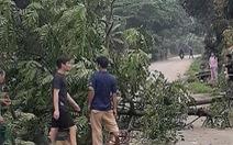 Chặt cây trước nhà, cây đổ ra đường đè chết người đi xe máy