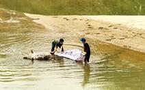 'Vô tư' vứt xác heo hàng tạ xuống sông