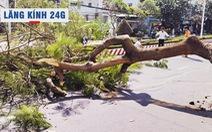 Lăng kính 24g: Cảnh báo tai nạn từ cây xanh trong mùa mưa bão