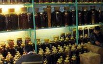 Cảnh báo rượu ngâm cây anh túc: Gây nghiện, ngộ độc