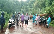 Cây đổ ngang đường Đắk Nông - Lâm Đồng đè chết người đi xe máy