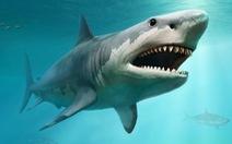 Nghiên cứu đầu tiên chứng minh cá mập cảm nhận từ trường để định hướng
