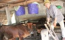 Chợ Hà Tĩnh vắng bóng thịt bò