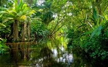 Sức mạnh đặc biệt của rừng mưa ở châu Phi