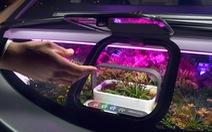 Xu thế trồng cây trên ô tô trong thời kỳ dịch COVID-19