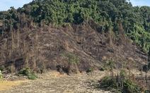 Giám đốc công ty đốt thực bì gây cháy lan cây rừng: 'Chúng tôi sai!'