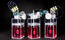 Lần đầu tạo được trái tim mini trong phòng thí nghiệm, đập như tim thật