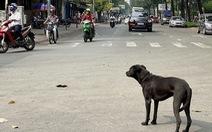 Phát hoảng với chó thả rông trong đô thị