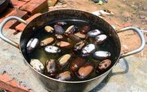 Bọ to hơn hột mít ăn trụi vườn cây ăn trái tại Bình Phước
