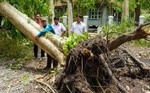 Nhiều cây lớn ngã đổ, tạm ngưng đón khách đến Trung ương Cục miền Nam