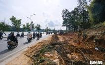 Đà Lạt đốn hạ, di dời hàng loạt cây cổ thụ để mở rộng đường ven hồ Xuân Hương