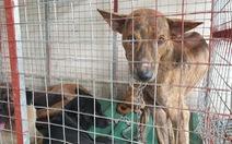 Bắt được trộm chó, công an lên mạng rao tìm chủ cho chó cưng