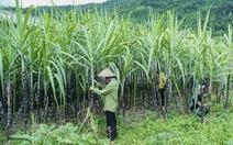 Đường mía nhập từ Thái Lan bị đánh thuế 47,64% trong 5 năm