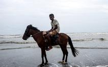 Ngựa 'thất nghiệp', chết vì không có du khách
