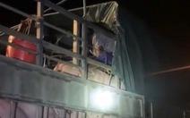 Gần 20 người trốn trong xe tải chở heo hòng qua chốt kiểm soát COVID-19