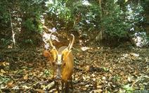Campuchia lần đầu phát hiện loài mang quý hiếm