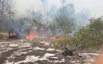 Rừng phòng hộ ven biển ở Quảng Nam bốc cháy ngùn ngụt nhiều giờ