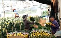 TP.HCM mở cửa tạm thời chợ Đầm Sen giúp nông dân Lâm Đồng, giải phóng ùn ứ vựa hoa Đà Lạt