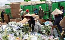 Vướng quy định mới, hoa Đà Lạt xuất khẩu phải xay làm phân