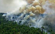 Các nhà khoa học lần đầu xác nhận: Rừng Amazon 'thải' carbon nhiều hơn mức hấp thu