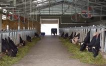 Ách tắc tiêu thụ sữa tươi của nông dân Sóc Trăng, Cần Thơ được tháo gỡ