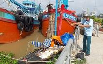 Điều tra vụ nam thuyền viên tàu cá nhảy sông Tiền tự vẫn