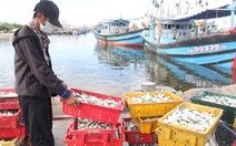 Đóng cửa cảng cá lớn nhất miền Trung, Đà Nẵng vẫn còn hơn 200 tấn thủy sản chờ tiêu thụ