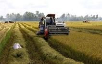 Lúa đầy đồng ở miền Tây, Bộ Nông nghiệp đề xuất mua dự trữ quốc gia